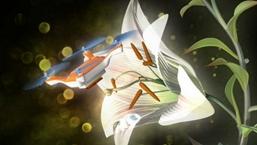 無人機替代蜜蜂為植物授粉?
