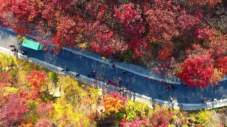 航拍:濟南紅葉谷最美紅葉季