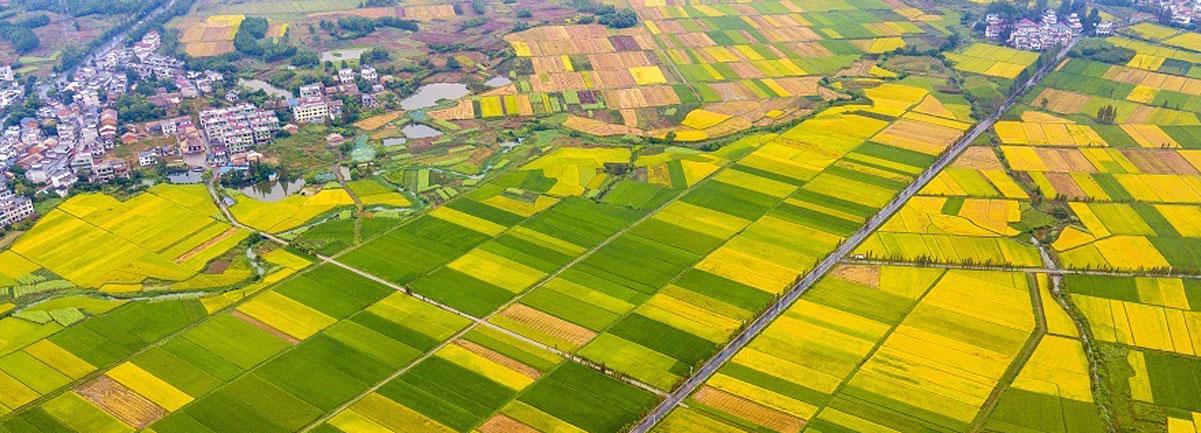 江西新余:秋日田園色彩斑斕