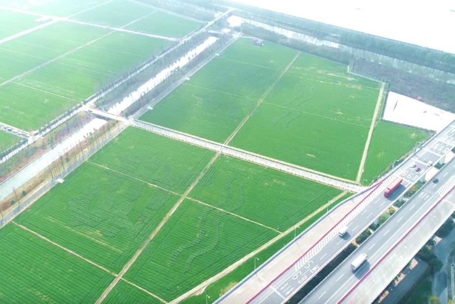 無人機飛上農田
