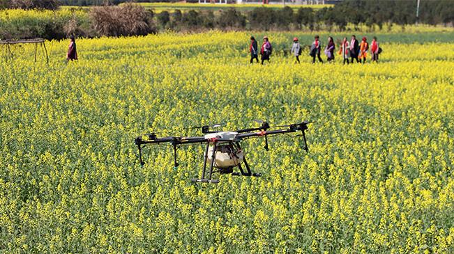 無人機打藥施肥搶農時