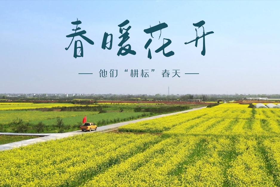 """【""""飛閱""""中國】衢州電力助力茶農""""耕耘""""春天"""