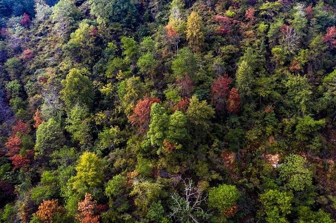 江西新余:森林公園秋意濃