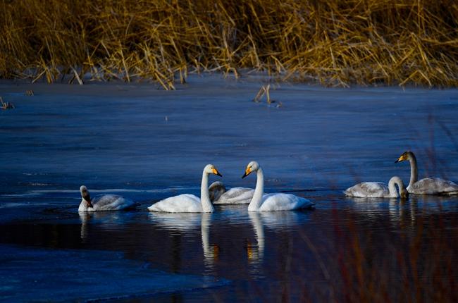 【生態文明@濕地】尋找冬日千姿湖的靜謐時光