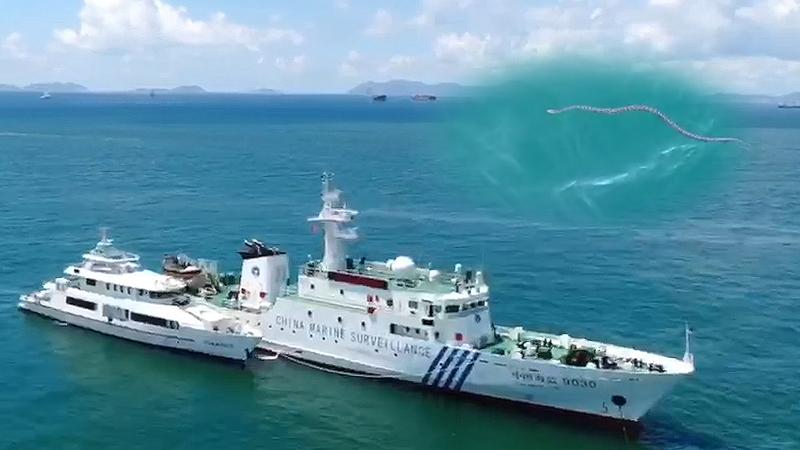 """溫情! 蟒蛇""""借宿""""執法船錨 船員送其回大海"""