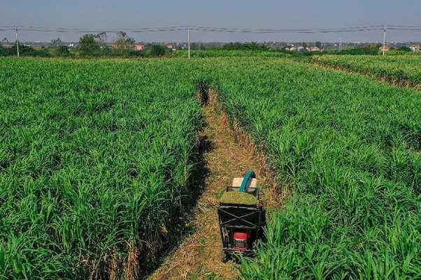 走進鄉村看小康丨湖北雲夢:糧草種植助力鄉村振興
