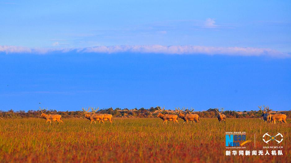 無人機之旅|航拍麋鹿與彩色濕地 愛上江蘇國家級自然保護區
